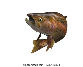 Green trout lake fish fly fishing 3d render