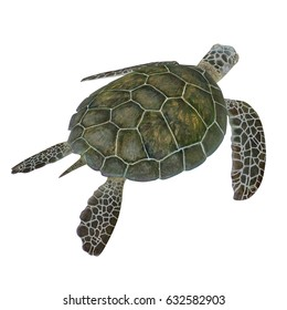 green turtle Chelonia mydas isolated on a white. 3D illustration