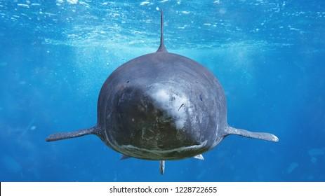 Greenland shark encounter, Somniosus microcephalus, deep sea shark species (3d rendering)
