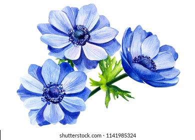 greeting card, bouquet of beautiful flowers blue anemone, on isolated white background, watercolor illustration, botanical painting