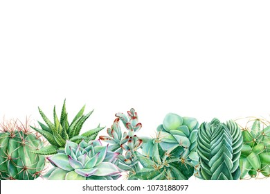 greeting card with space for text of painted green plants, succulents and cacti, watercolor hand drawing, botanical painting
