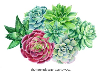 greeting card, spring bouquet of multicolored succulentson an isolated white background, watercolor illustration, botanical painting, Echeveria, Haworthia