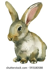 Grey Brown Spring Rabbit Bunny Hare Watercolor  Isolated on White Background