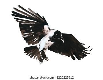 grey crow watercolor