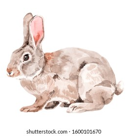 Grey rabbit watercolor illustration. Hand painted white isolated background.