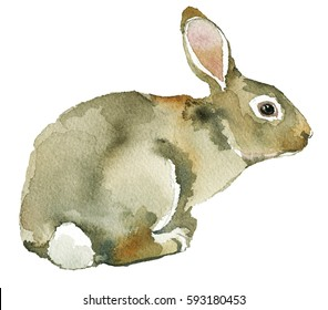 Grey Spring Rabbit Bunny Hare Watercolor  Isolated on White Background