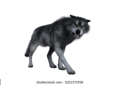 Grey wolf looking aggressive, 3D illustration isolated on white background.