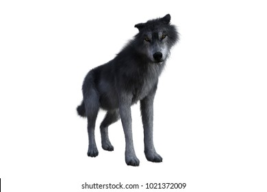 Grey wolf standing with submissive expression. 3D illustration isolated on white background.