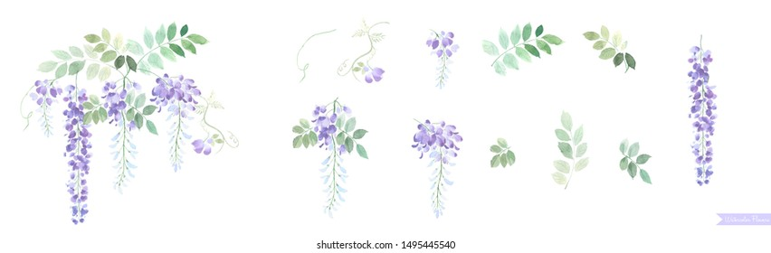 A group of beautiful wisteria flowers, including the simple idea of Chinese style, holiday cards and invitation cards.