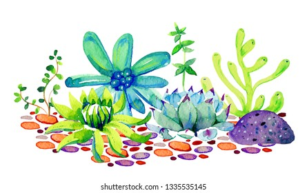 Group of different succulents on stones. Watercolor hand drawn color  sketch illustration isolated on white background