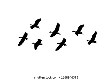 Group of ducks flying over white background graphic silhouette design