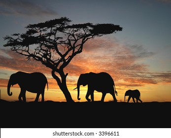 Group of elephant in africa