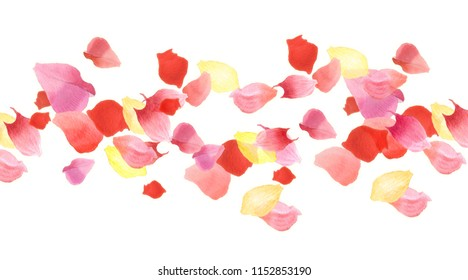 Group of flower petals. Abstract background for wedding ceremony. Watercolor painting