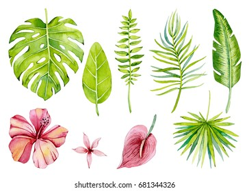 Group of individual elements, watercolor, tropical flowers and leaves