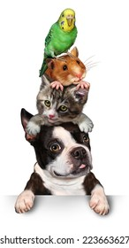 Group of pets concept as a dog cat hamster and budgie standing on top of each other as a symbol for veterinary care and support or pet store design element for advertising and marketing on white.