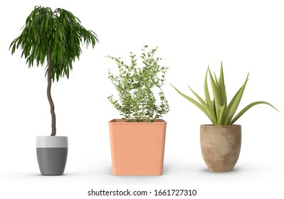 Group of Potted Plant with shadow on white background,realistic 3D illustration.