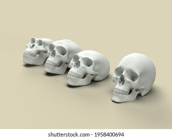 A group of skulls of different human species. 3d Illustration