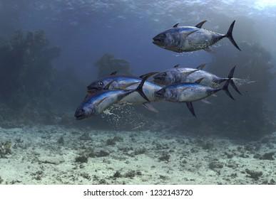 Group of tuna fish underwater swimming 3d render