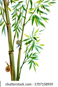 Growing bamboo and snails, watercolor illustration on a white background, isolated. Bamboo is a symbol of longevity, oriental, Chinese painting of usin.