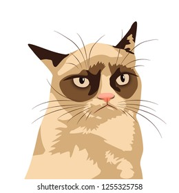 Grumpy cat meme. Isolate White background.
