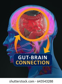 Gut-brain connection or gut brain axis. Concept art showing a connection from the gut to the brain. 3d illustration.