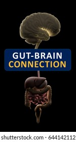Gut-brain connection or gut brain axis. Concept art showing the health connection from the gut to the brain. 3d illustration.