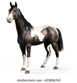 Gypsy Vanner horse on a white background. 3d rendering