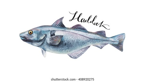 Haddock fish whole isolated on a white background