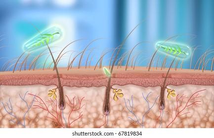 Hair follicle (close-up)