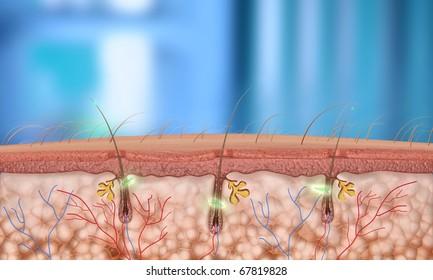 hair follicle close-up (Depth of Field)