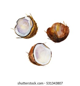 The half coconut in perspective on white background, watercolor illustration set in hand-drawn style.