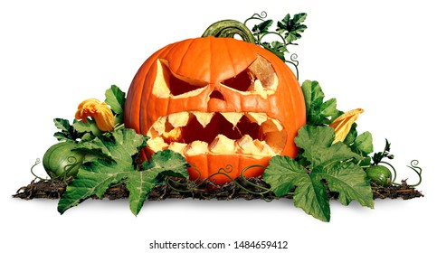 Halloween pumpkin jack o lantern with pumpkins and leaves on a white as a concept and symbol for a creepy advertisement and marketing announcement for a harvest with 3D illustration elements.