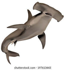 Hammerhead Shark Body - Hammerhead sharks usually school during the day and become solitary hunters at night.