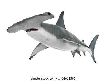 Hammerhead Shark Isolated. 3D rendering
