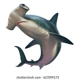 Hammerhead shark on white. Realistic isolated illustration.