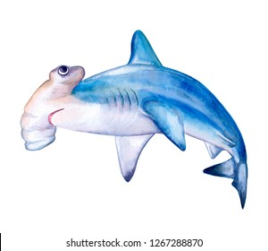 Hammerhead shark. White death of a shark isolated on a white background. Watercolor. Illustration. Template. Card. Clipart. Close-up.