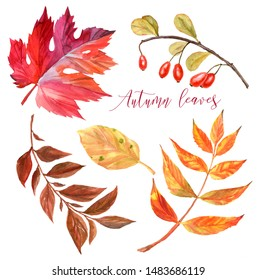 Hand draw watercolor autumn pumpkins isolated on white background, harvest festival and Thanksgiving day concept
