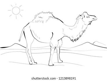 Camel Sketch Art