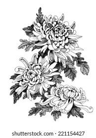 Hand drawing chrysanthemum flower