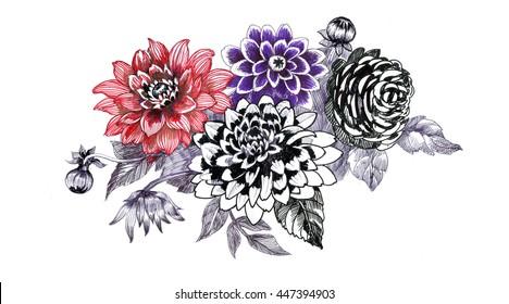Hand drawing chrysanthemum flowers sketch