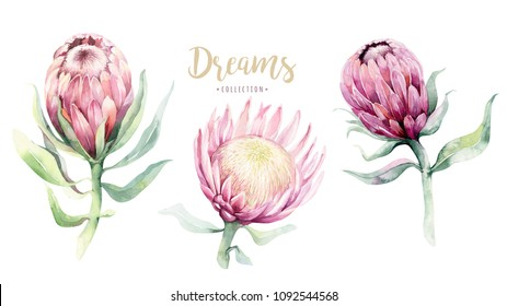 Hand drawing isolated watercolor floral illustration with protea rose, leaves, branches and flowers. Bohemian gold crystal frame. Elements for greeting wedding card.