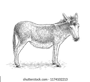 Hand drawing of a sad standing donkey