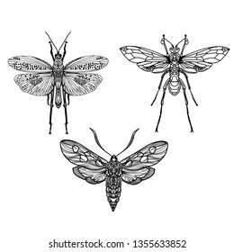 Hand drawing set insect beetle. Isolated on white. Vector illustration Decorative graphics. Element for print, tattoo art design