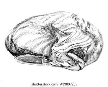 Hand drawing sleeping cat illustration