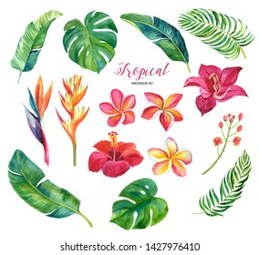 Hand drawing tropical leaves, flowers. Watercolor set. For fabric, cards, invitations, weddings and other