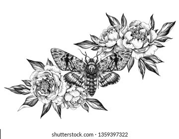 Hand drawn Acherontia Styx butterfly and Peony flowers on white. Pencil drawing monochrome elegant floral composition with Death's-Head Hawkmoth top view. Illustration in vintage style, tattoo art.