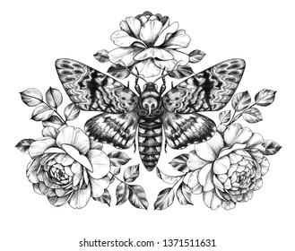 Hand drawn Acherontia Styx butterfly and Rose flowers on white. Pencil drawing monochrome elegant floral composition with Death's-Head Hawkmoth top view. Illustration in vintage style, tattoo art.