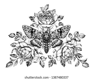 Hand drawn Acherontia Styx butterfly and Roses on white. Pencil drawing monochrome elegant floral composition with Death's-Head Hawkmoth top view. Illustration in vintage style, tattoo art.
