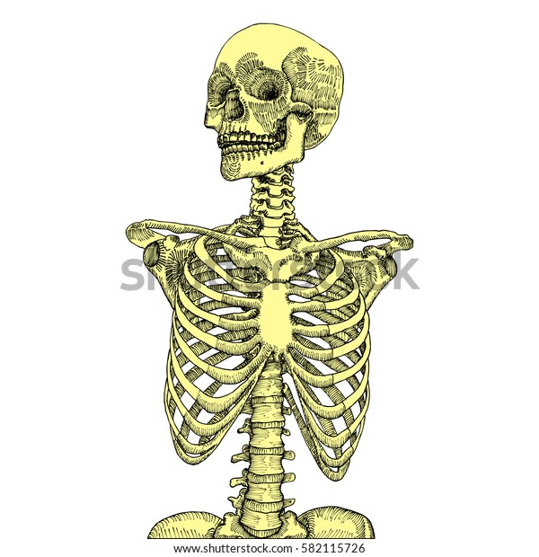 Hand drawn anatomical medical human ribcage with skull. On white background. Designed for t-shirt print.  Raster.