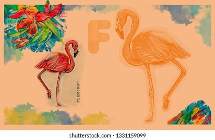 hand drawn animal for English alphabet , Flamingo